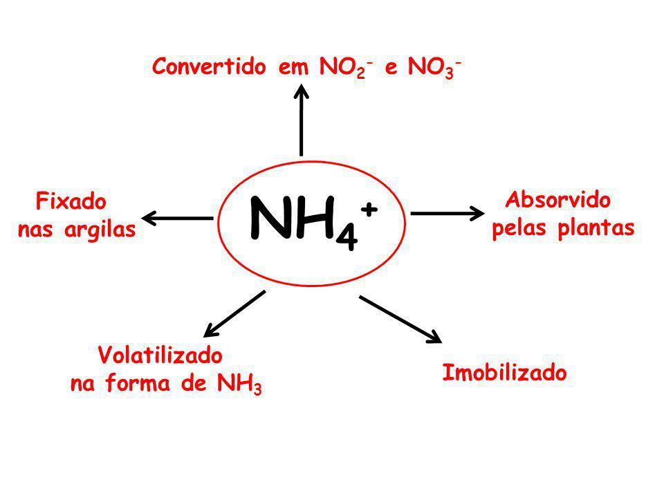 Convertido em NO 2 - e NO 3 - Absorvido pelas plantas Imobilizado Fixado nas argilas Volatilizado na forma de NH 3 NH 4 +