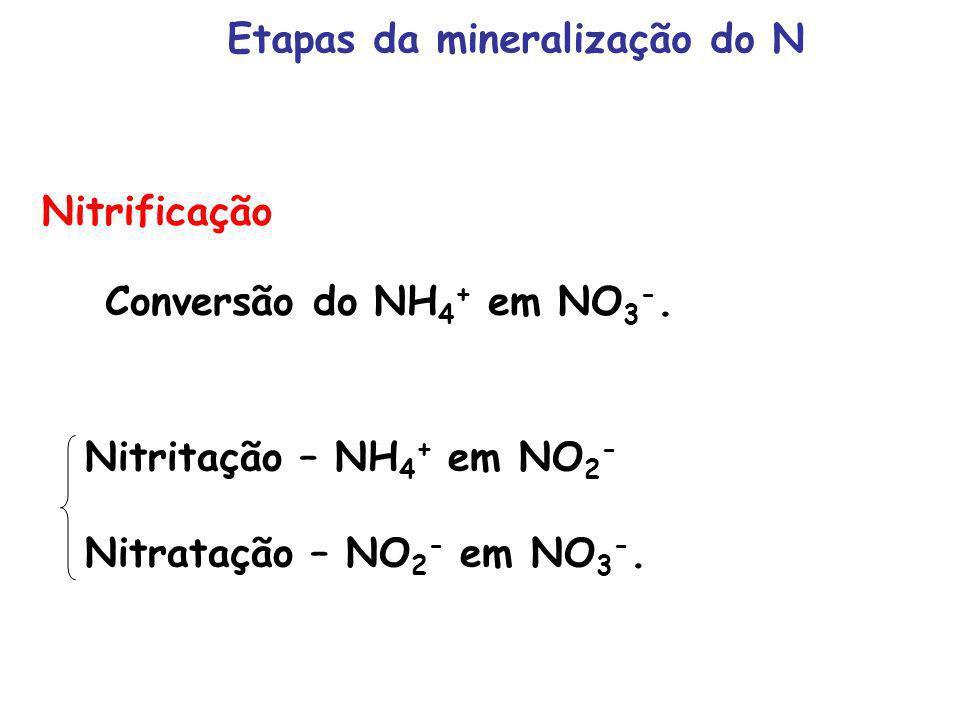 Nitrificação Conversão do NH 4 + em NO 3 -. Nitritação – NH 4 + em NO 2 - Nitratação – NO 2 - em NO 3 -. Etapas da mineralização do N