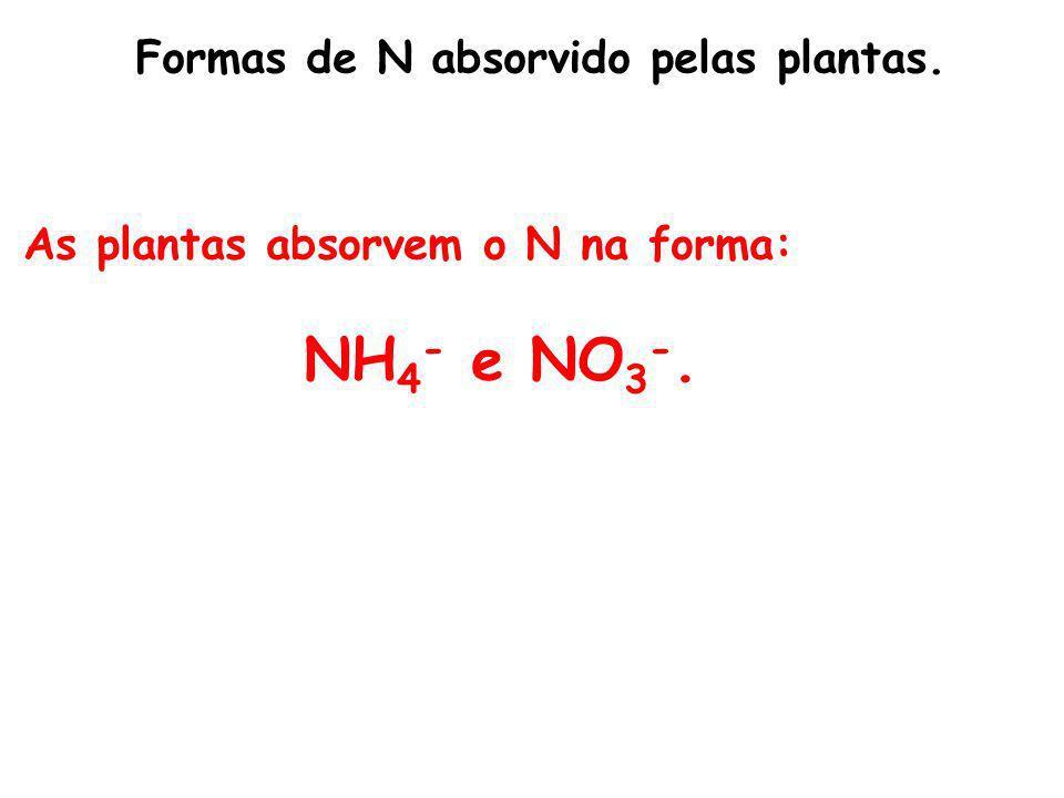 Formas de N absorvido pelas plantas. As plantas absorvem o N na forma: NH 4 - e NO 3 -.