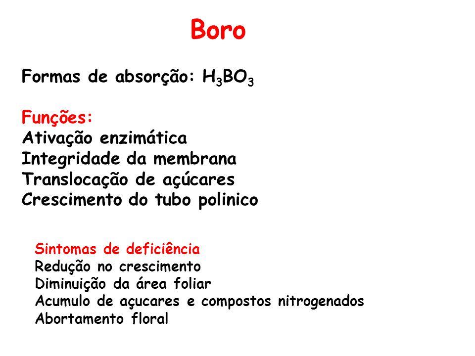 Boro Formas de absorção: H 3 BO 3 Funções: Ativação enzimática Integridade da membrana Translocação de açúcares Crescimento do tubo polinico Sintomas
