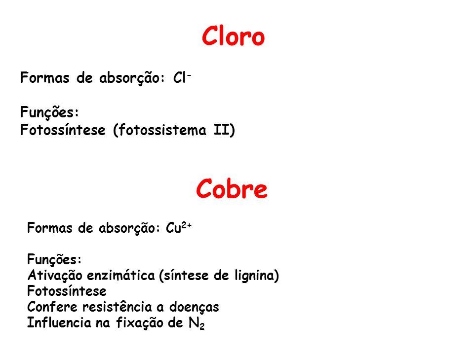 Cloro Formas de absorção: Cl - Funções: Fotossíntese (fotossistema II) Cobre Formas de absorção: Cu 2+ Funções: Ativação enzimática (síntese de lignin