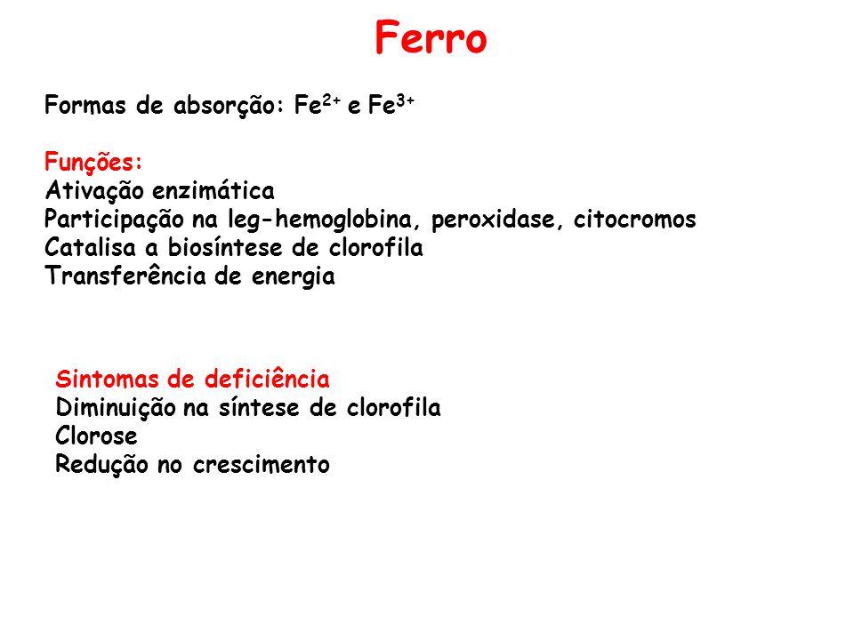 Ferro Formas de absorção: Fe 2+ e Fe 3+ Funções: Ativação enzimática Participação na leg-hemoglobina, peroxidase, citocromos Catalisa a biosíntese de