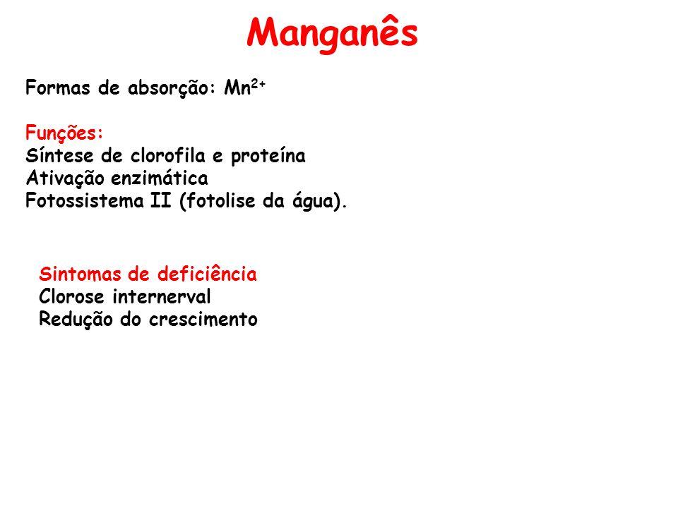 Manganês Formas de absorção: Mn 2+ Funções: Síntese de clorofila e proteína Ativação enzimática Fotossistema II (fotolise da água). Sintomas de defici