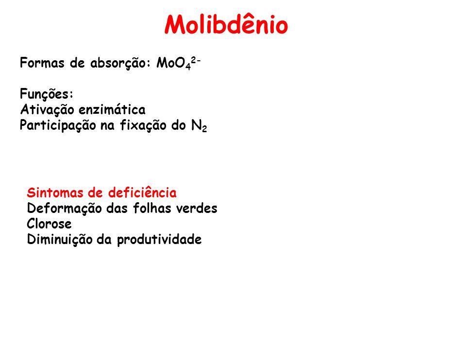 Molibdênio Formas de absorção: MoO 4 2- Funções: Ativação enzimática Participação na fixação do N 2 Sintomas de deficiência Deformação das folhas verd