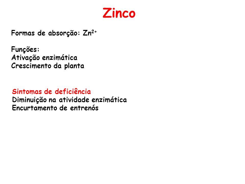 Zinco Formas de absorção: Zn 2+ Funções: Ativação enzimática Crescimento da planta Sintomas de deficiência Diminuição na atividade enzimática Encurtam