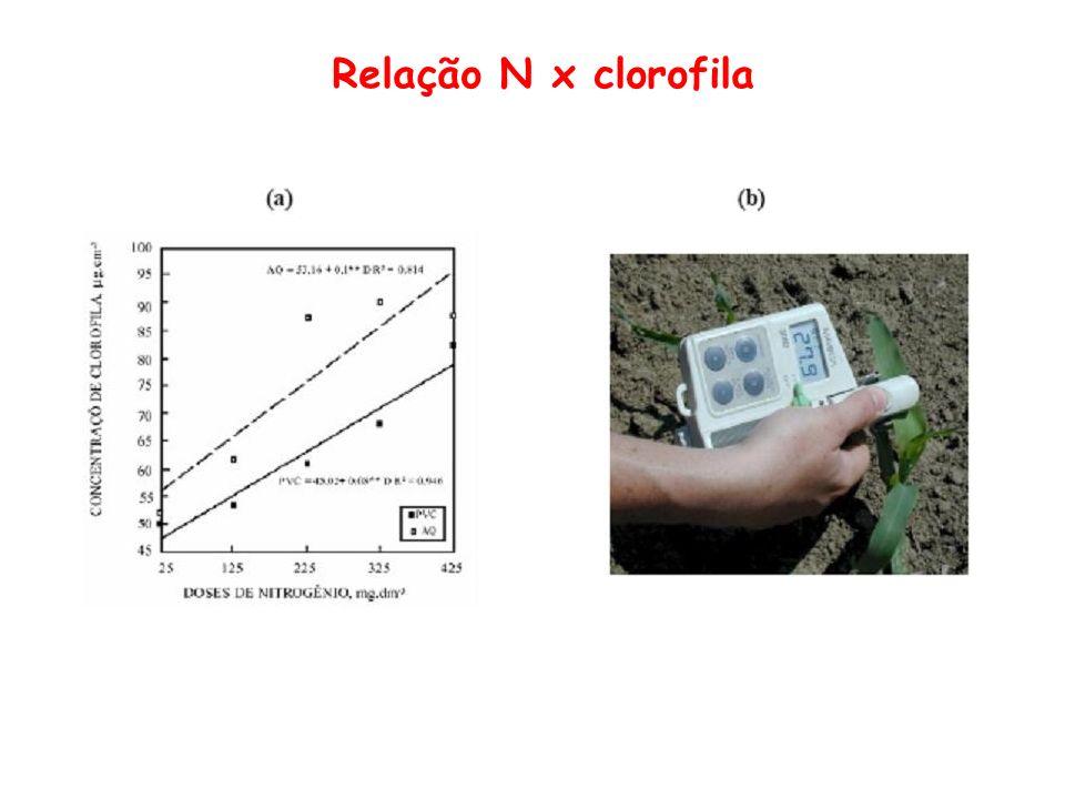 Relação N x clorofila