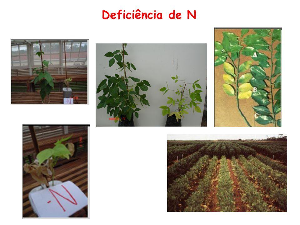 Fósforo Formas de absorção: H 2 PO 4 - e HPO 4 2- Funções: Fotossíntese Respiração Transferência de energia Divisão e crescimento celular Rápido crescimento radicular Formação de frutos e sementes