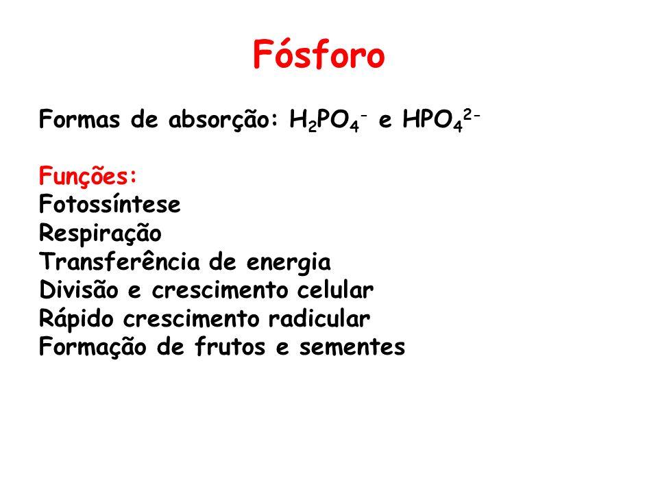 Fósforo Formas de absorção: H 2 PO 4 - e HPO 4 2- Funções: Fotossíntese Respiração Transferência de energia Divisão e crescimento celular Rápido cresc