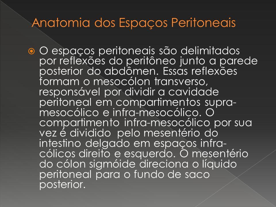 O espaços peritoneais são delimitados por reflexões do peritôneo junto a parede posterior do abdômen. Essas reflexões formam o mesocólon transverso, r