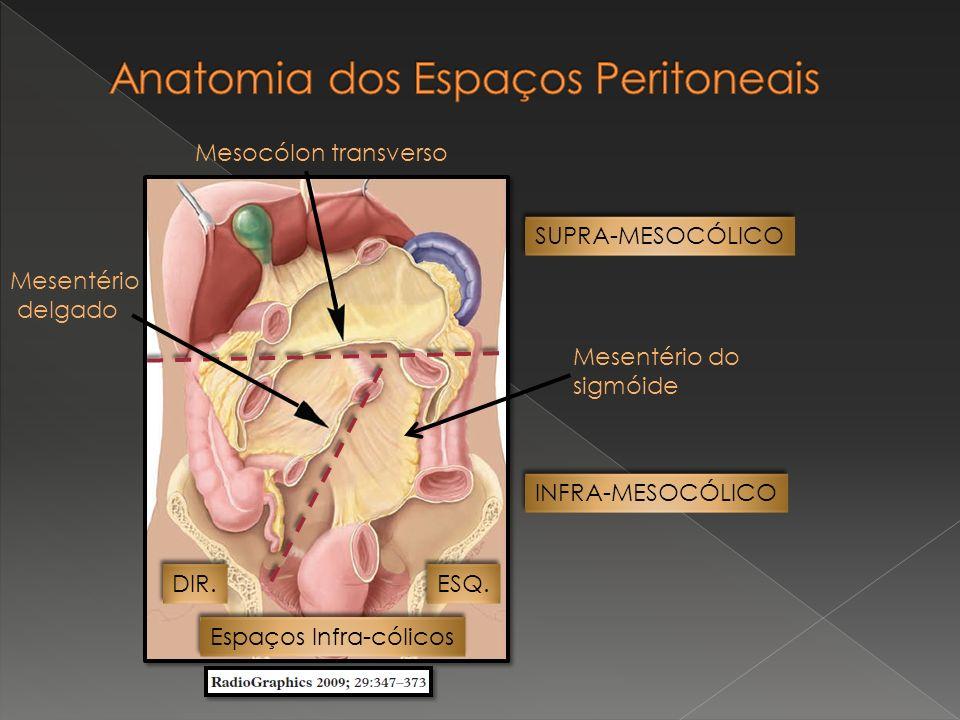 A cavidade peritoneal possui uma pequena quantidade de líquido semelhante ao plasma.