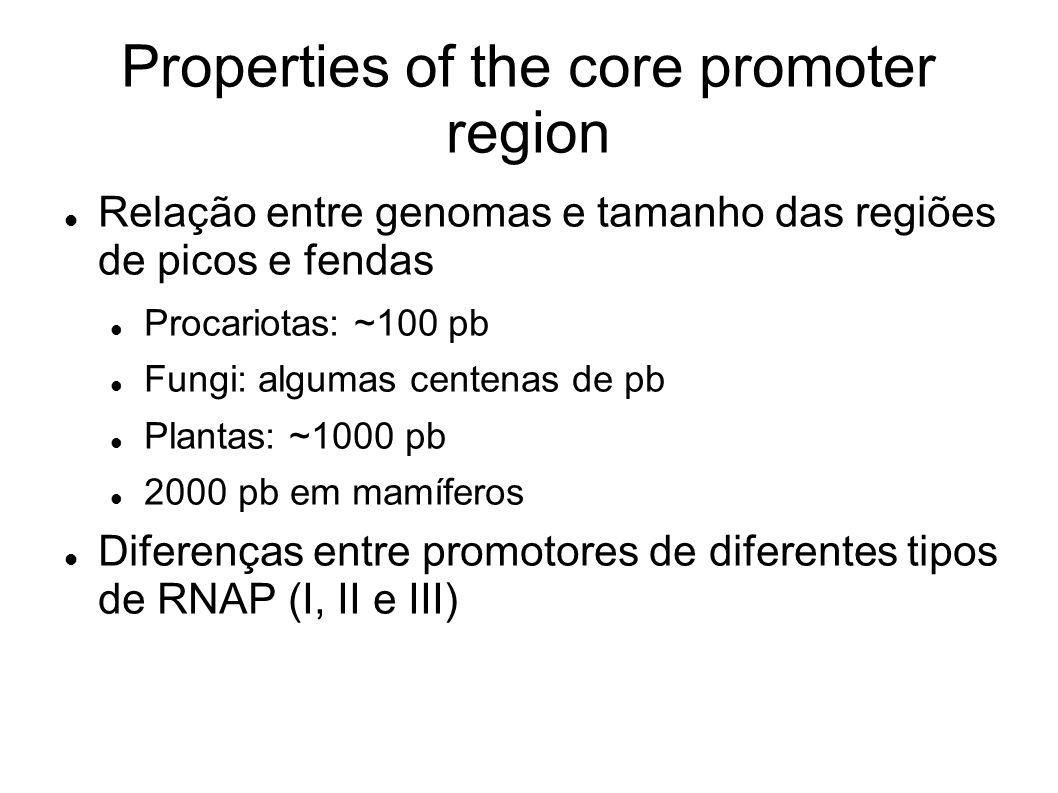 Properties of the core promoter region Relação entre genomas e tamanho das regiões de picos e fendas Procariotas: ~100 pb Fungi: algumas centenas de pb Plantas: ~1000 pb 2000 pb em mamíferos Diferenças entre promotores de diferentes tipos de RNAP (I, II e III)