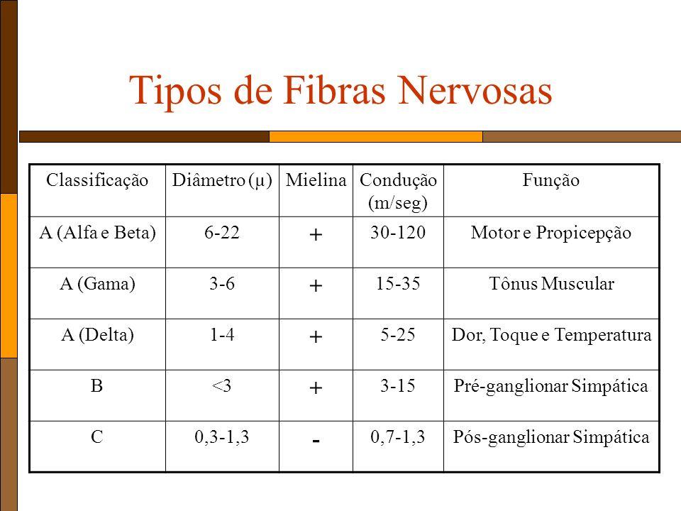Tipos de Fibras Nervosas ClassificaçãoDiâmetro (µ)MielinaCondução (m/seg) Função A (Alfa e Beta)6-22 + 30-120Motor e Propicepção A (Gama)3-6 + 15-35Tônus Muscular A (Delta)1-4 + 5-25Dor, Toque e Temperatura B<3 + 3-15Pré-ganglionar Simpática C0,3-1,3 - 0,7-1,3Pós-ganglionar Simpática