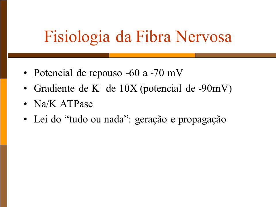 Fisiologia da Fibra Nervosa Potencial de repouso -60 a -70 mV Gradiente de K + de 10X (potencial de -90mV) Na/K ATPase Lei do tudo ou nada: geração e propagação
