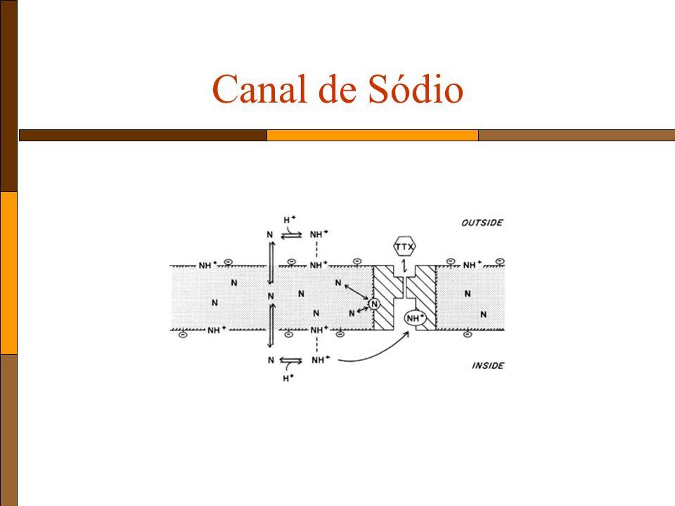 Canal de Sódio