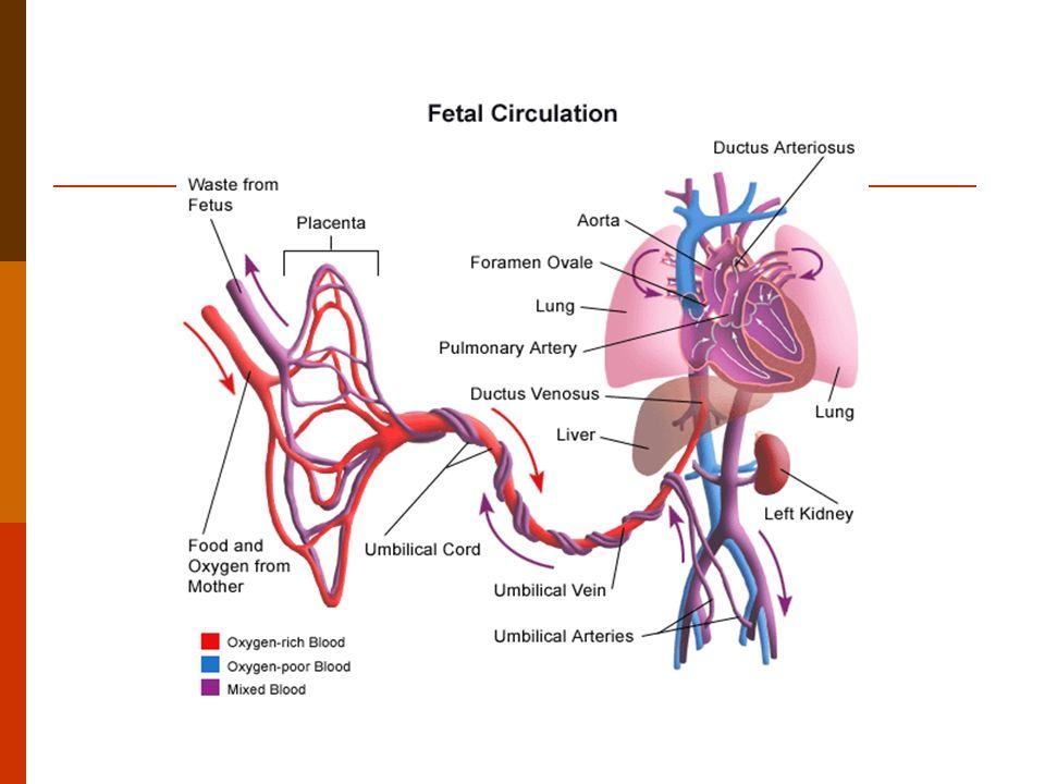 Persistência Canal Arterial Patológico quando > 4dias Prematuridade não é fator de risco Sind Stress Respiratório Hipóxia Parto Hipertensão Pulmonar