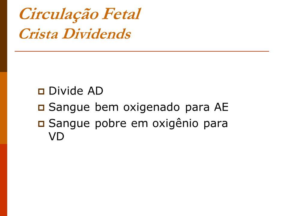 Circulação Fetal Crista Dividends Divide AD Sangue bem oxigenado para AE Sangue pobre em oxigênio para VD