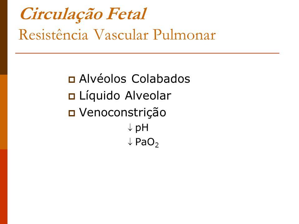 Circulação Fetal Resistência Vascular Pulmonar Alvéolos Colabados Líquido Alveolar Venoconstrição pH PaO 2