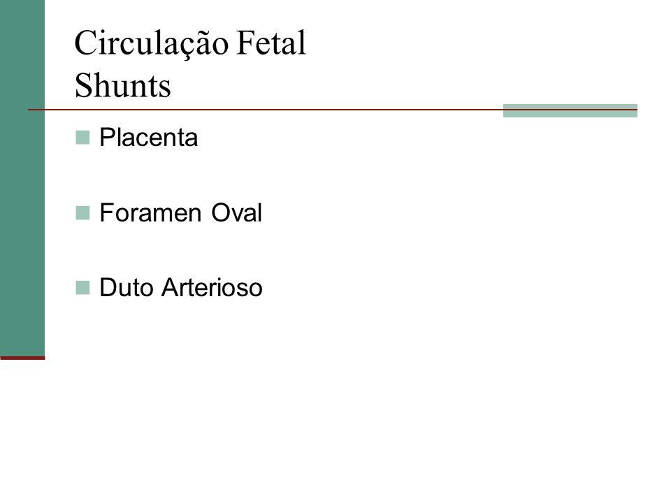 Circulação Fetal Shunts Placenta Foramen Oval Duto Arterioso