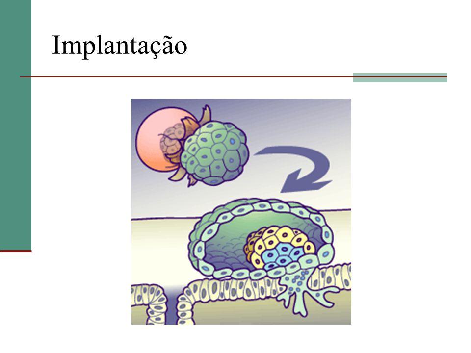 Formação da Placenta Vilo coriônico: projeção de células citotrofoblásticas recobertas pelo sinciciotrofoblasto Íntimo contato com sangue materno Espaço interviloso160 – 250 ml 10 mmHg