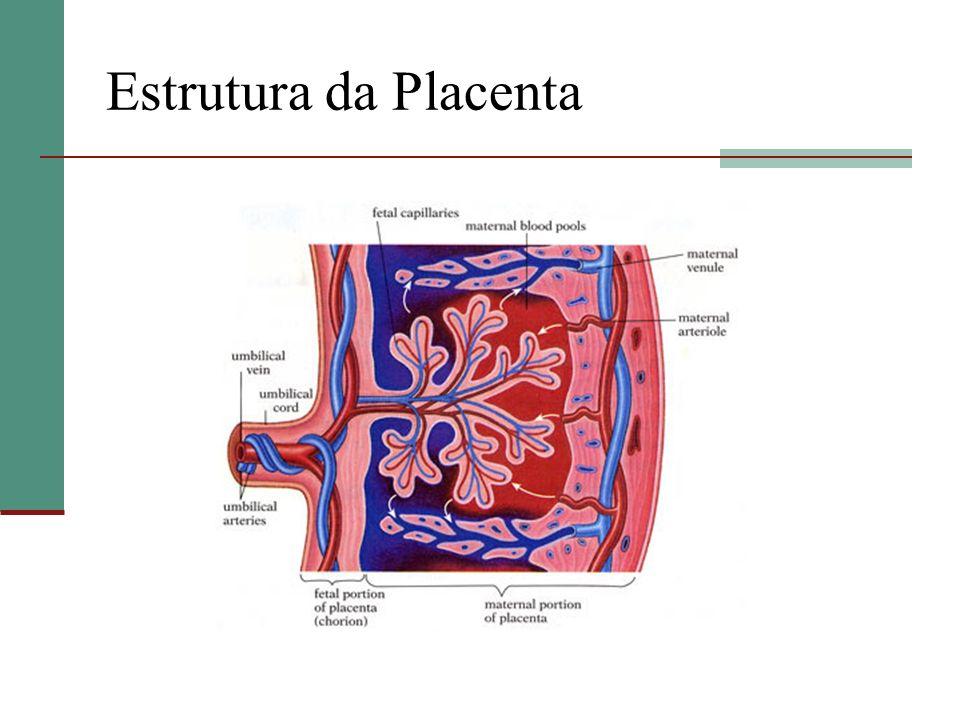 Espaço Interviloso 70 a 90% do FSU Pressão 10mmHg Sangue materno (80 a 90 mmHg) entra em jato PREVENÇÃO DE SHUNT Drenagem passiva Fluxo 500 a 800 ml.min -1