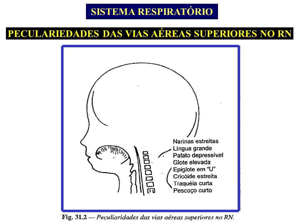 PECULARIEDADES DAS VIAS AÉREAS SUPERIORES NO RN SISTEMA RESPIRATÓRIO