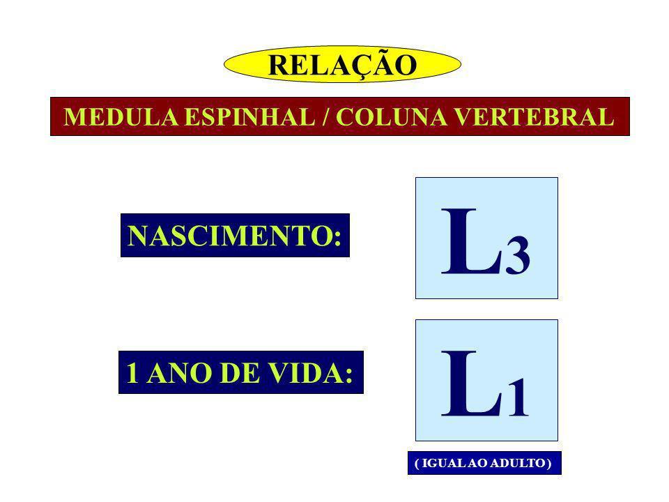MEDULA ESPINHAL / COLUNA VERTEBRAL NASCIMENTO: 1 ANO DE VIDA: ( IGUAL AO ADULTO ) RELAÇÃO L3L3 L1L1