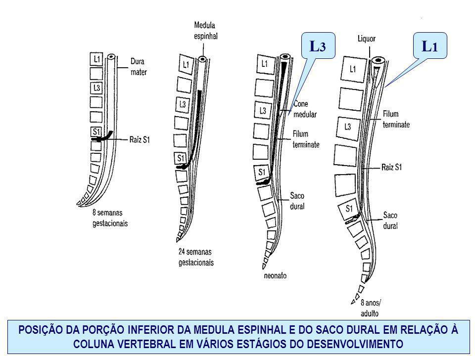 POSIÇÃO DA PORÇÃO INFERIOR DA MEDULA ESPINHAL E DO SACO DURAL EM RELAÇÃO À COLUNA VERTEBRAL EM VÁRIOS ESTÁGIOS DO DESENVOLVIMENTO L1L1 L3L3