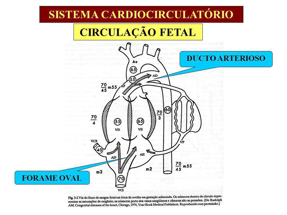 CIRCULAÇÃO FETAL SISTEMA CARDIOCIRCULATÓRIO DUCTO ARTERIOSO FORAME OVAL