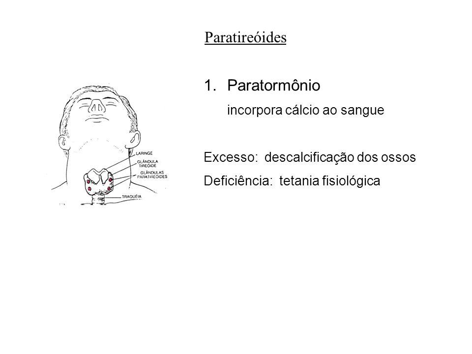 adalberto Paratireóides 1.Paratormônio incorpora cálcio ao sangue Excesso: descalcificação dos ossos Deficiência: tetania fisiológica