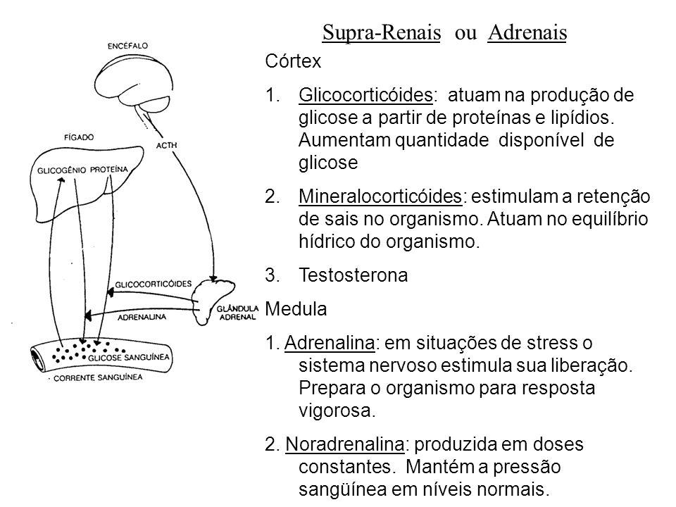 adalberto Supra-Renais ou Adrenais Córtex 1.Glicocorticóides: atuam na produção de glicose a partir de proteínas e lipídios. Aumentam quantidade dispo