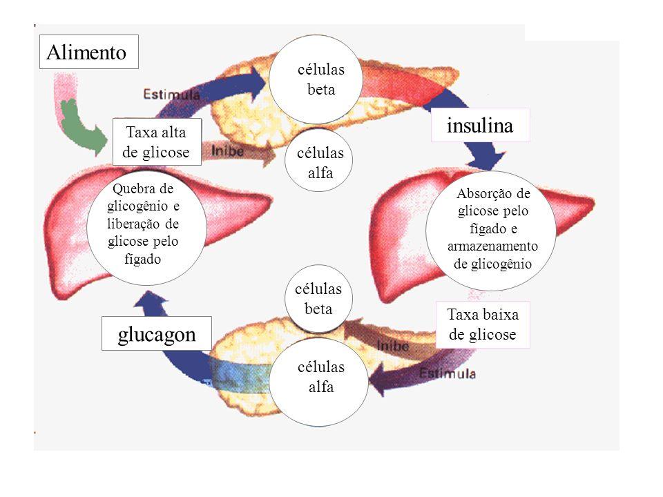adalberto insulina Taxa baixa de glicose Absorção de glicose pelo fígado e armazenamento de glicogênio células beta células alfa Taxa alta de glicose