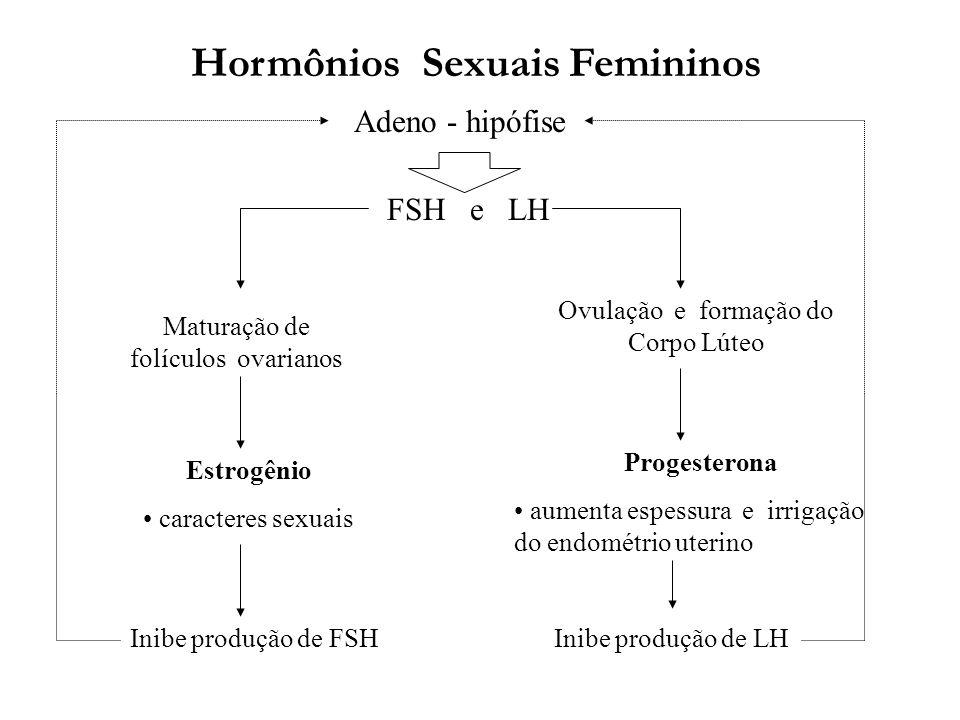 Hormônios Sexuais Femininos Adeno - hipófise FSH e LH Maturação de folículos ovarianos Progesterona aumenta espessura e irrigação do endométrio uterin
