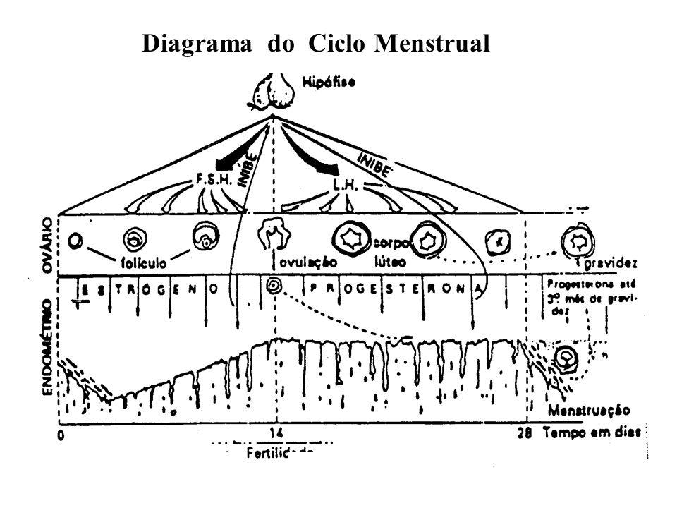 Diagrama do Ciclo Menstrual