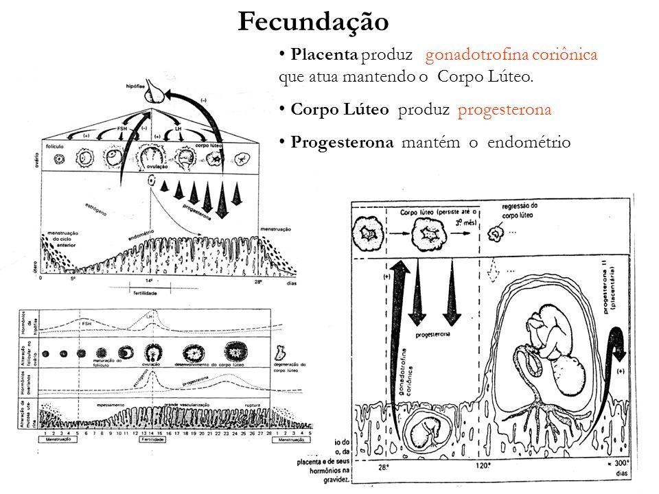 adalberto Fecundação Placenta produz gonadotrofina coriônica que atua mantendo o Corpo Lúteo. Corpo Lúteo produz progesterona Progesterona mantém o en