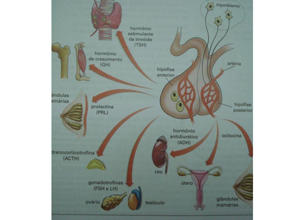 adalberto Pâncreas 1.Insulina: diminui a taxa de glicose no sangue.