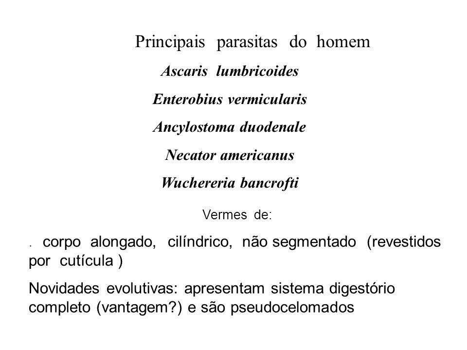 Principais parasitas do homem Ascaris lumbricoides Enterobius vermicularis Ancylostoma duodenale Necator americanus Wuchereria bancrofti Vermes de:. c