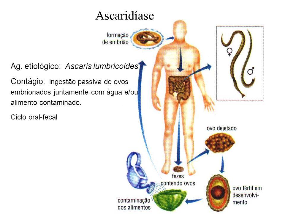 Ascaridíase Ag. etiológico: Ascaris lumbricoides Contágio: ingestão passiva de ovos embrionados juntamente com água e/ou alimento contaminado. Ciclo o