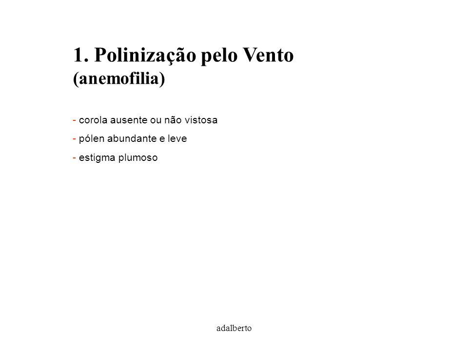 adalberto 1. Polinização pelo Vento (anemofilia) - corola ausente ou não vistosa - pólen abundante e leve - estigma plumoso