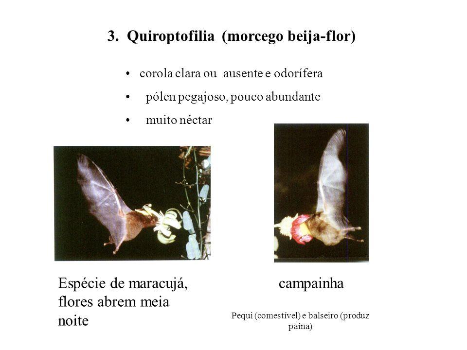 Pequi (comestível) e balseiro (produz paina) corola clara ou ausente e odorífera pólen pegajoso, pouco abundante muito néctar 3. Quiroptofilia (morceg
