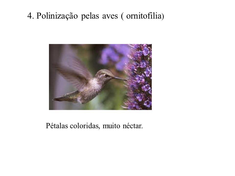 4. Polinização pelas aves ( ornitofilia ) Pétalas coloridas, muito néctar.