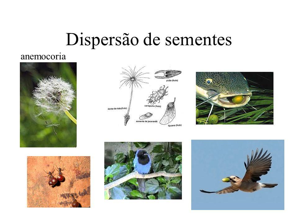 Dispersão de sementes anemocoria