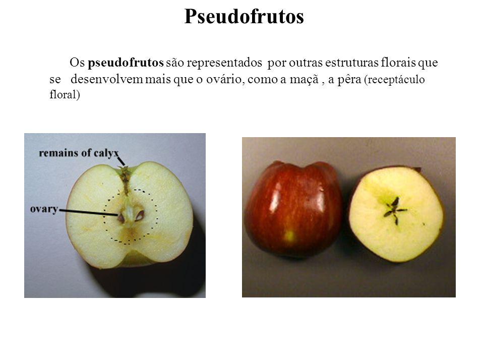 Os pseudofrutos são representados por outras estruturas florais que se desenvolvem mais que o ovário, como a maçã, a pêra (receptáculo floral) Pseudof