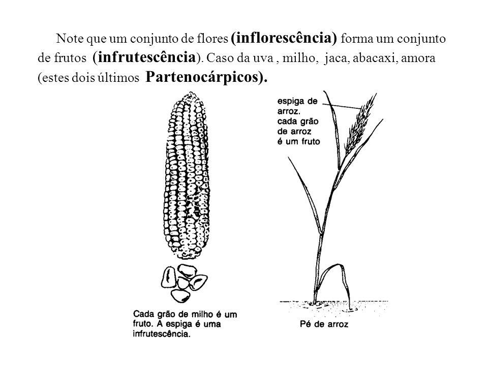 adalberto Note que um conjunto de flores (inflorescência) forma um conjunto de frutos (infrutescência ). Caso da uva, milho, jaca, abacaxi, amora (est
