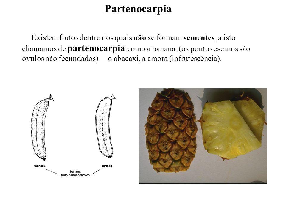 adalberto Existem frutos dentro dos quais não se formam sementes, a isto chamamos de partenocarpia como a banana, (os pontos escuros são óvulos não fe