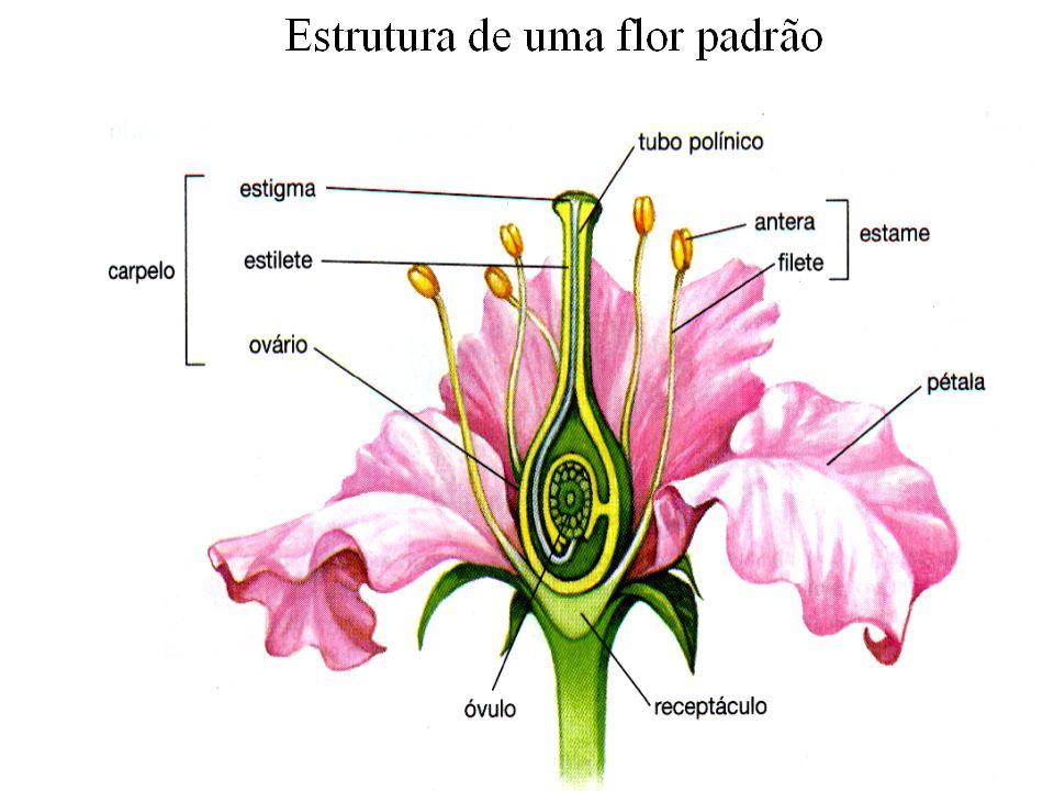 adalberto Considerações sobre frutos Flor isolada forma fruto isolado Fruto verdadeiro é o ovário desenvolvido, como por exemplo:pêssego, ameixa, tomate,abobrinha, laranja, etc.
