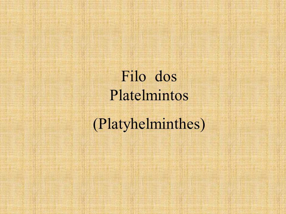 Filo dos Platelmintos (Platyhelminthes)