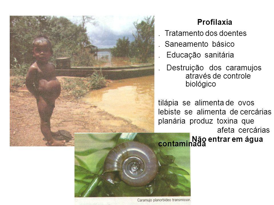 Profilaxia. Tratamento dos doentes. Saneamento básico. Educação sanitária. Destruição dos caramujos através de controle biológico tilápia se alimenta