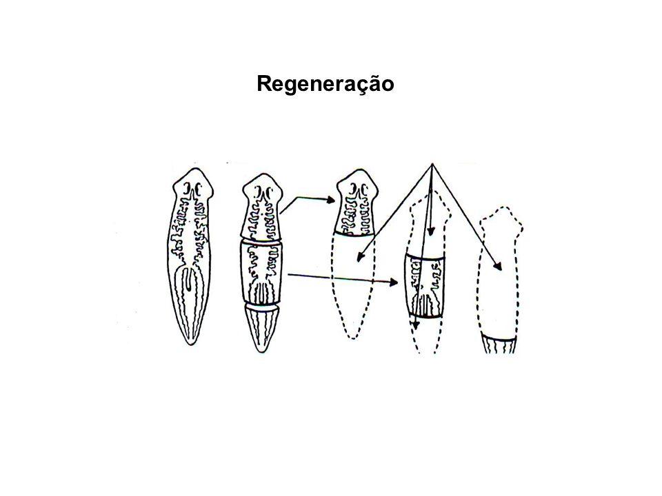 Regeneração