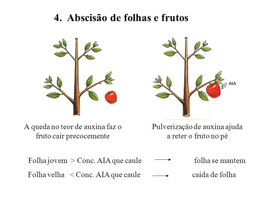 4. Abscisão de folhas e frutos Folha jovem > Conc. AIA que caule folha se mantem Folha velha < Conc. AIA que caule caída de folha Pulverização de auxi