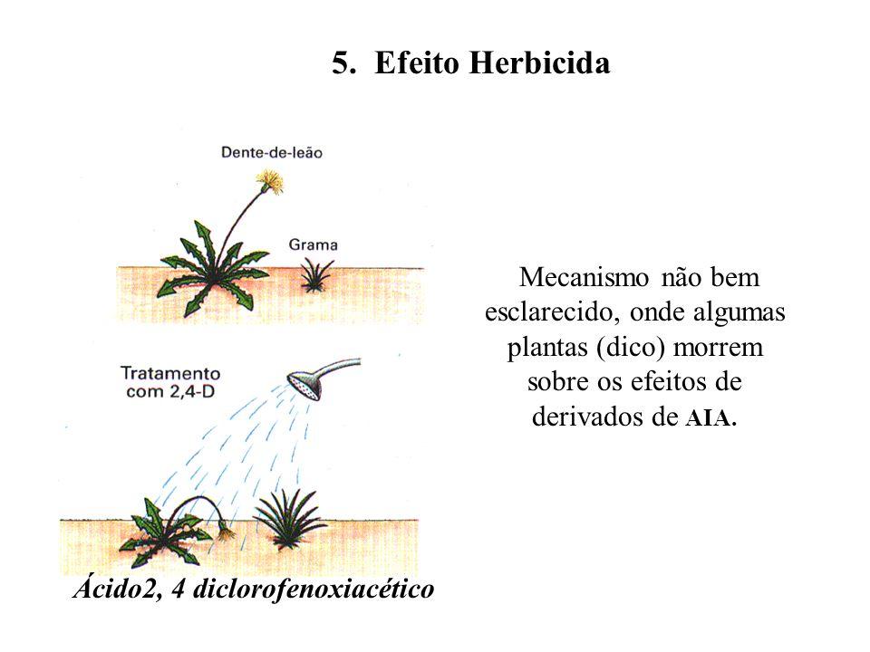 5. Efeito Herbicida Mecanismo não bem esclarecido, onde algumas plantas (dico) morrem sobre os efeitos de derivados de AIA. Ácido2, 4 diclorofenoxiacé